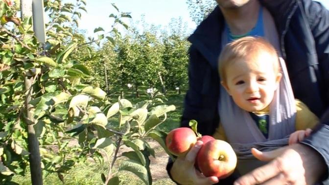 lisse apples thumb